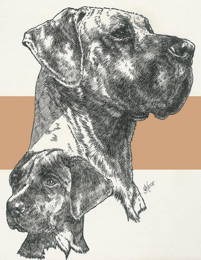 Great Dane Uncropped by Barbara Keith