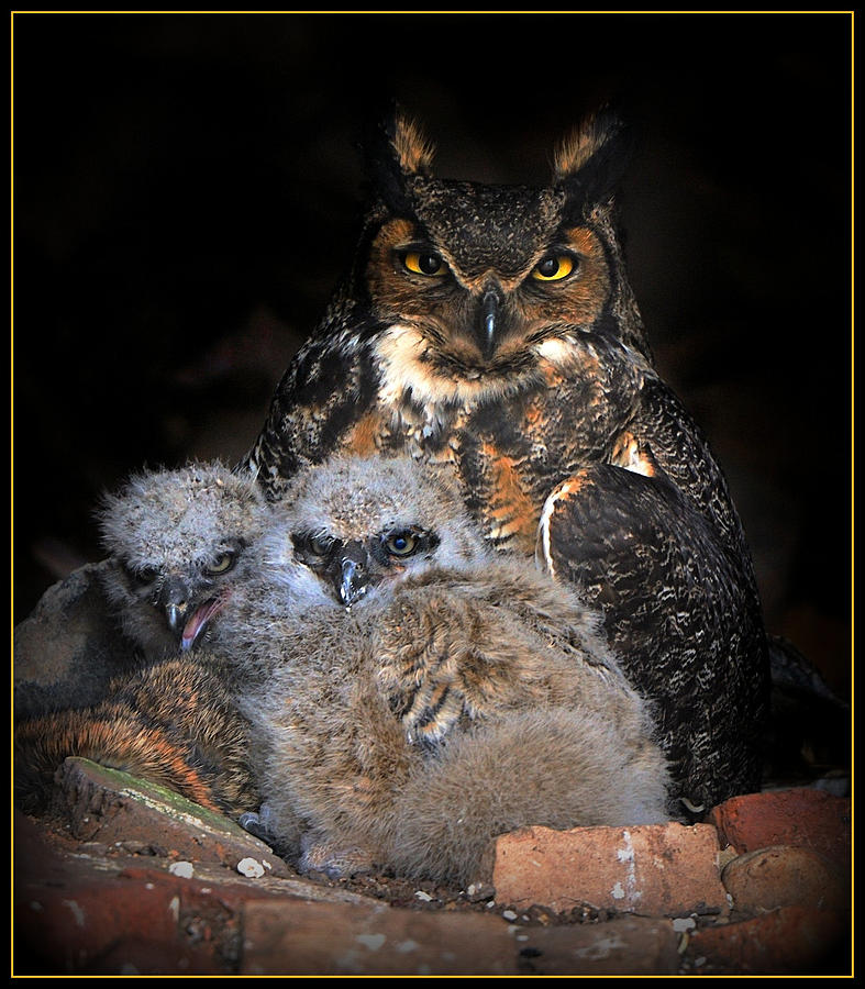 Great Horned Owl And Owlets Digital Art