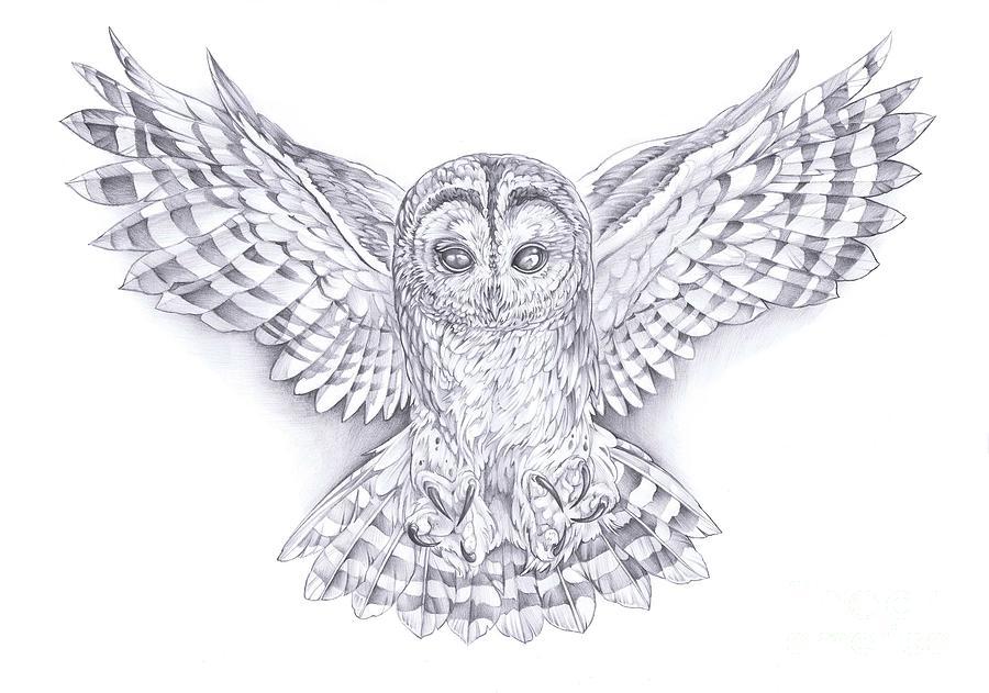 Great Owl Drawing by Gemma Pallat