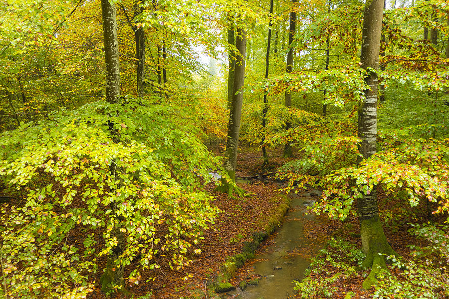 Forest Photograph - Green And Red Colors In The Forest In Fall by ...