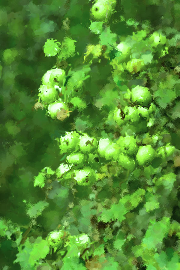 Green Apple On A Branch Photograph
