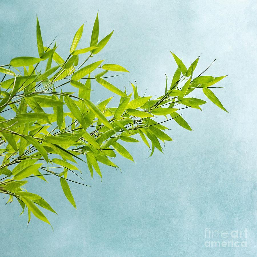 Green Bamboo Photograph