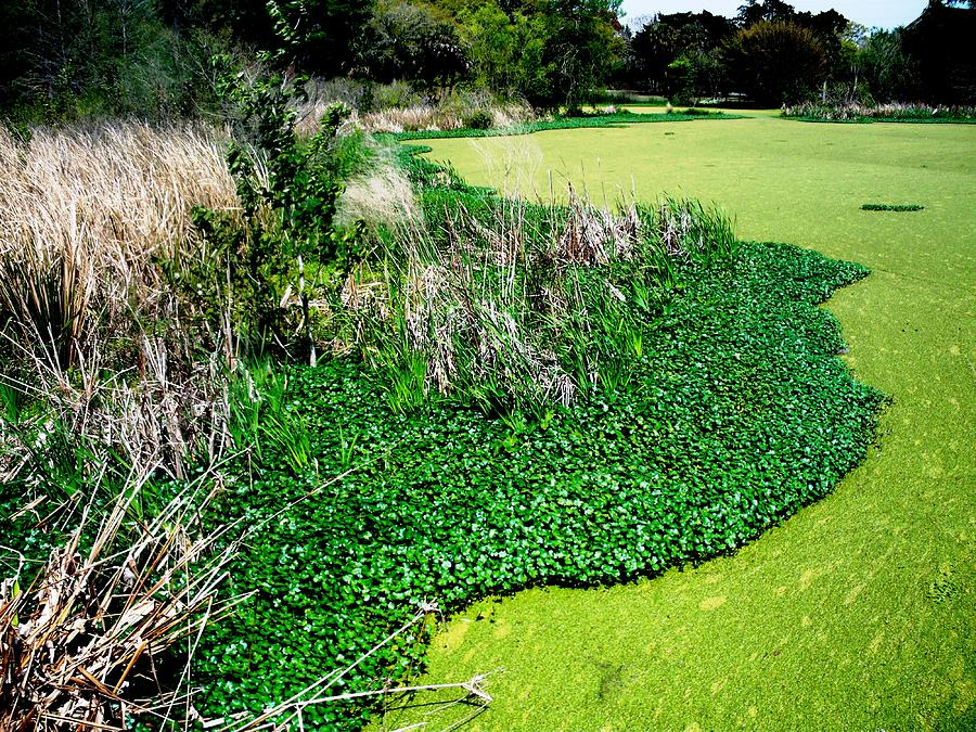 Green Belt Photograph
