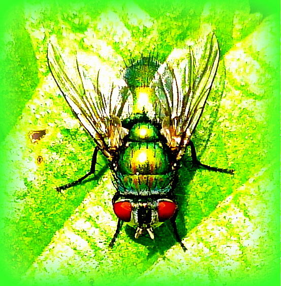 Green Photograph - Green Bottle Fly by The Creative Minds Art and Photography