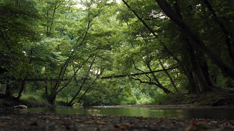 Green Photograph