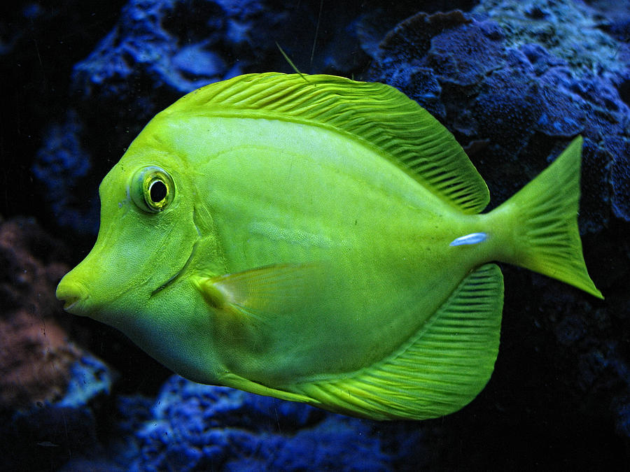 Green Fish Photograph