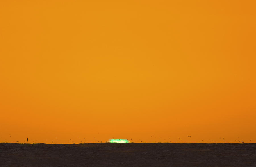 Green Flash Bird Pile Photograph