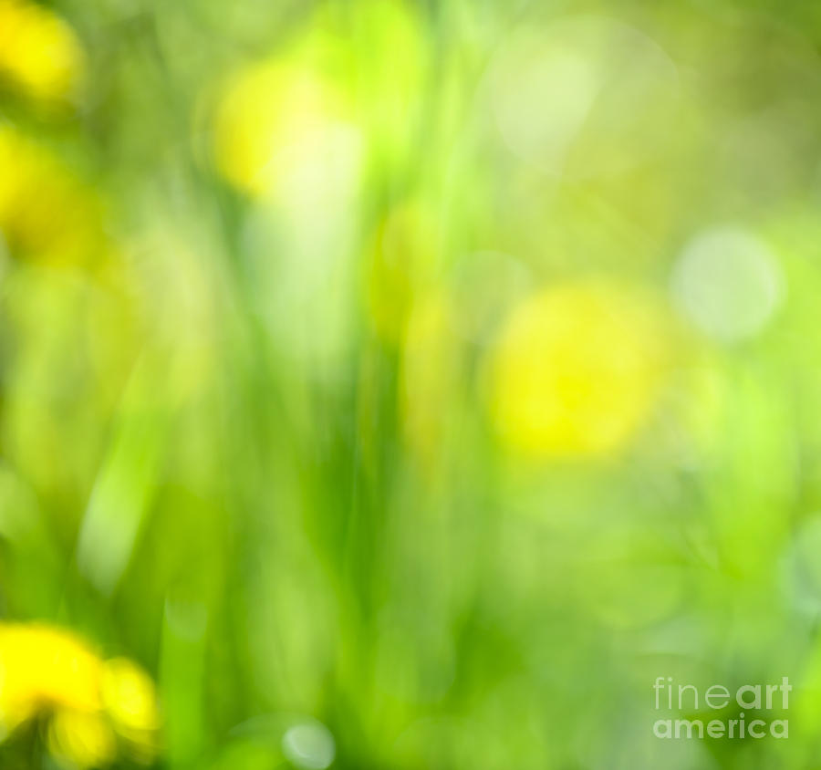 Green Grass With Yellow Flowers Abstract Photograph  - Green Grass With Yellow Flowers Abstract Fine Art Print