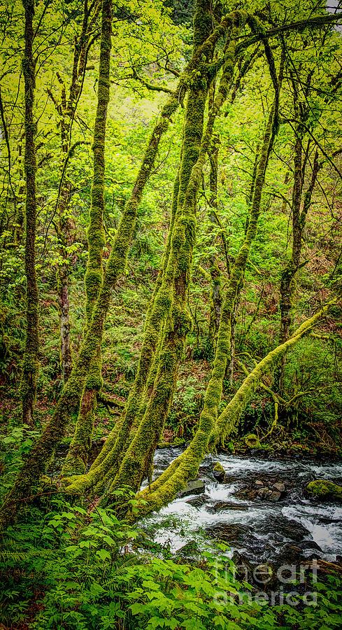 Bridal Veil Falls State Park Photograph - Green Green by Jon Burch Photography
