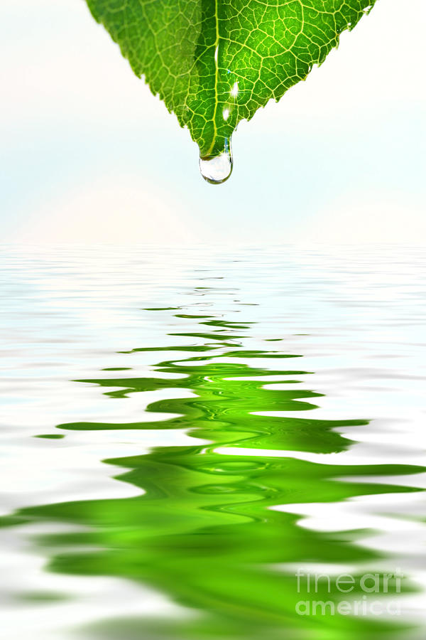 Green Leaf Over Water Reflection Photograph