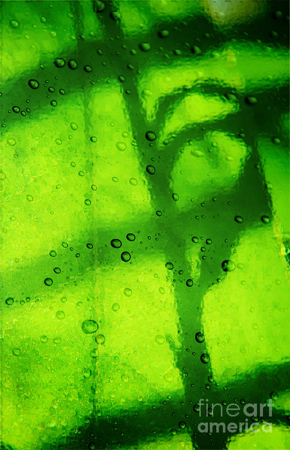 Green Leaf Through The Glass Photograph