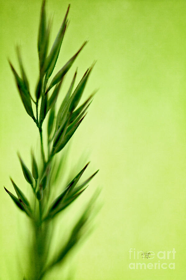 Green Photograph  - Green Fine Art Print