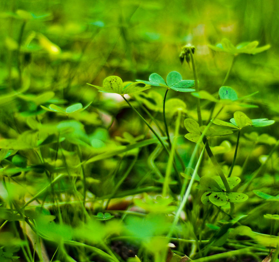 Green Morning  Photograph  - Green Morning  Fine Art Print