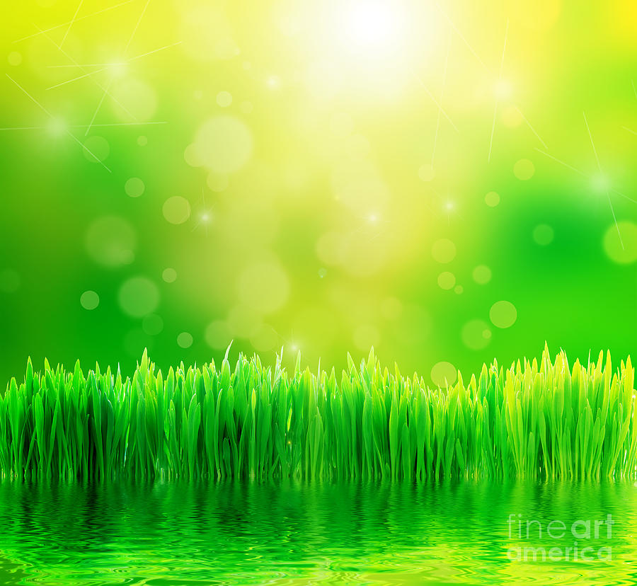 Green Nature Background With Fresh Grass Photograph  - Green Nature Background With Fresh Grass Fine Art Print