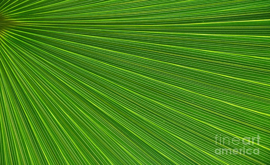 Green Palm Abstract Photograph