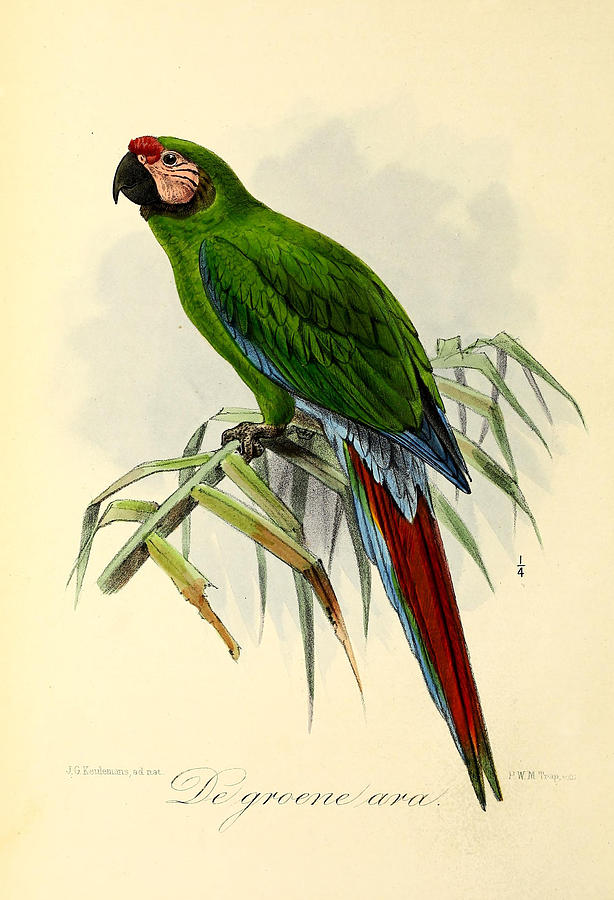 Green parrot painting - photo#14