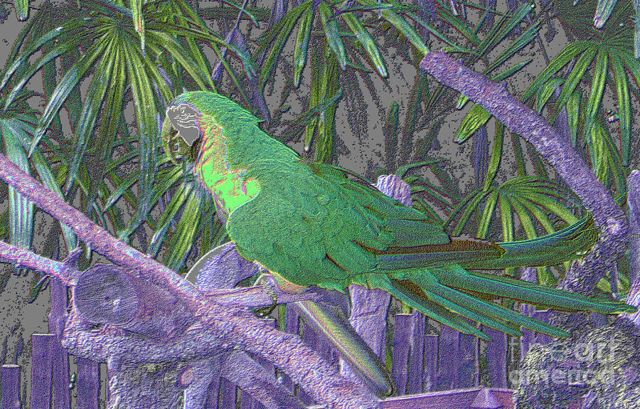 Green parrot painting - photo#18