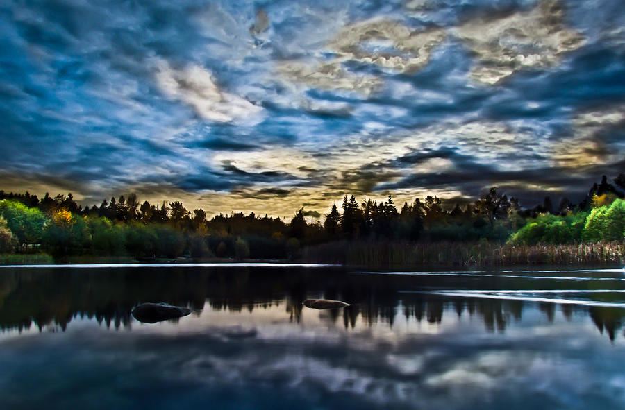 Green Timbers Park With Blue Sunset Photograph