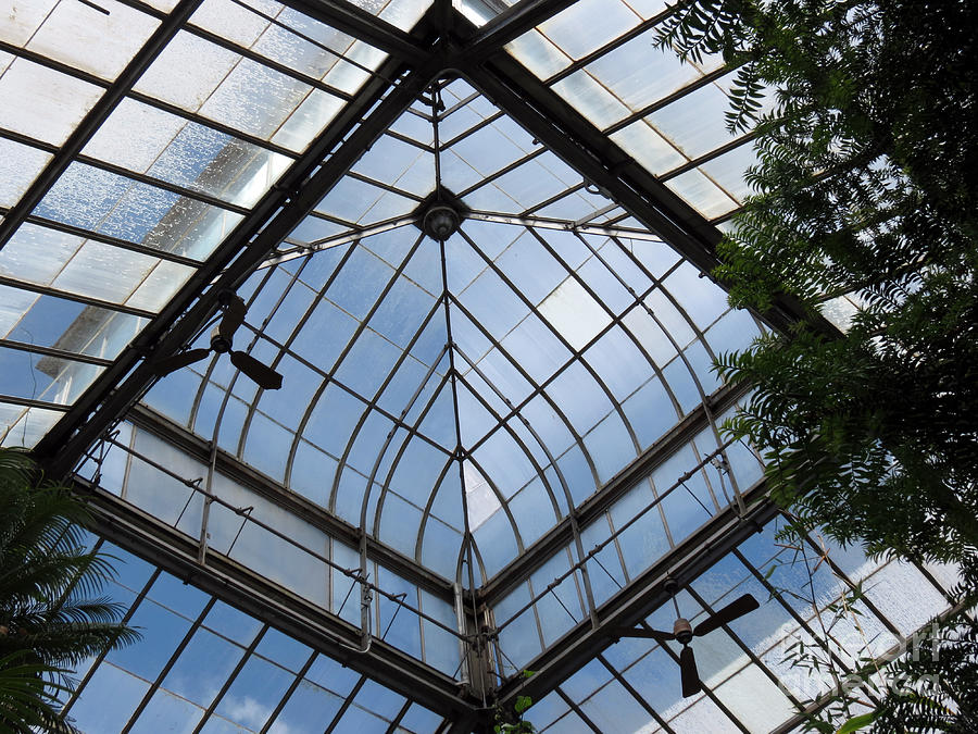 Greenhouse Roof Glass Photograph By Darleen Stry