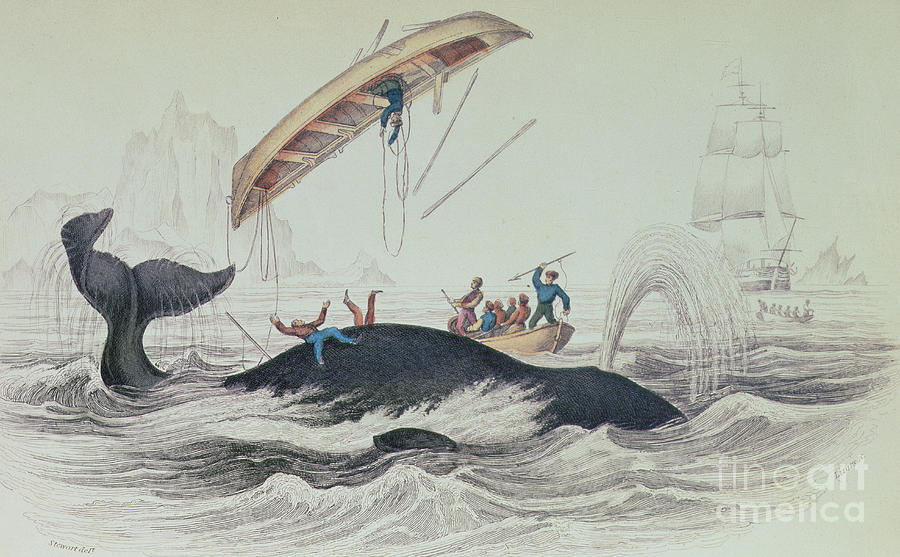 Boat; Capsized; Overturned; Upside Down; Ship; Sea; Iceberg; Harpoons; Arctic Drawing - Greenland Whale Book Illustration Engraved By William Home Lizars  by James Stewart