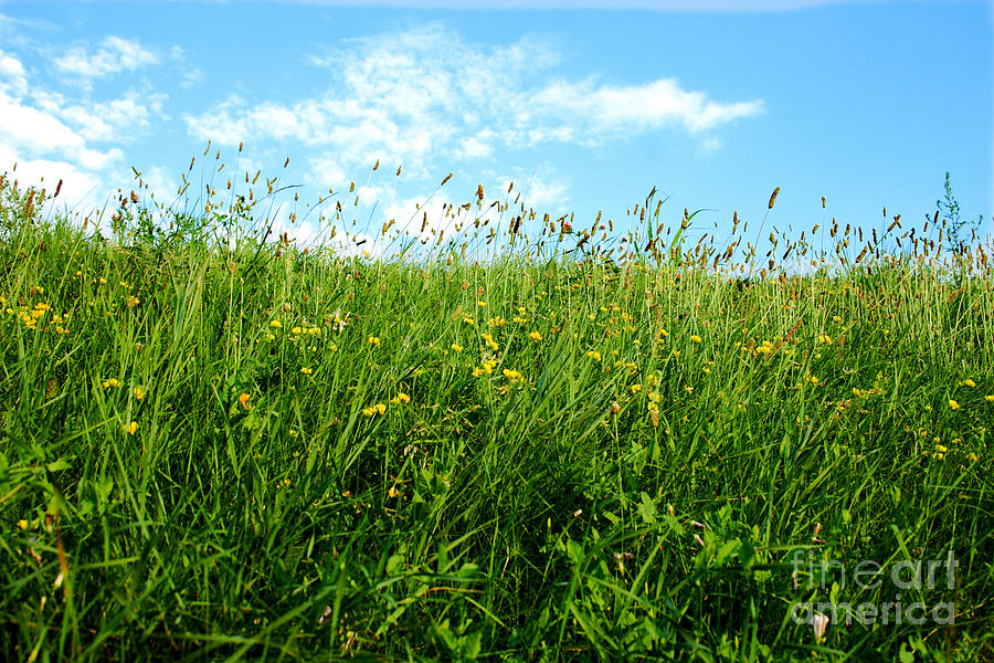 Greens Photograph