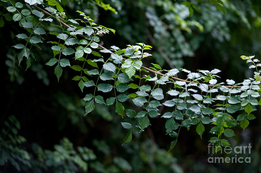 Greens Photograph  - Greens Fine Art Print