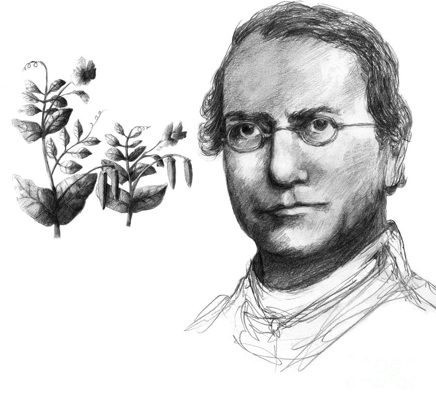 gregor mendel the father of genetics Browse and read gregor mendel father of the science of genetics gregor mendel father of the science of genetics spend your.