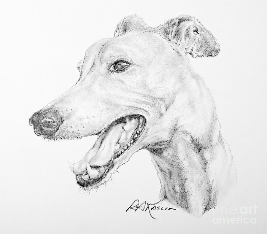 Greyhound Drawing