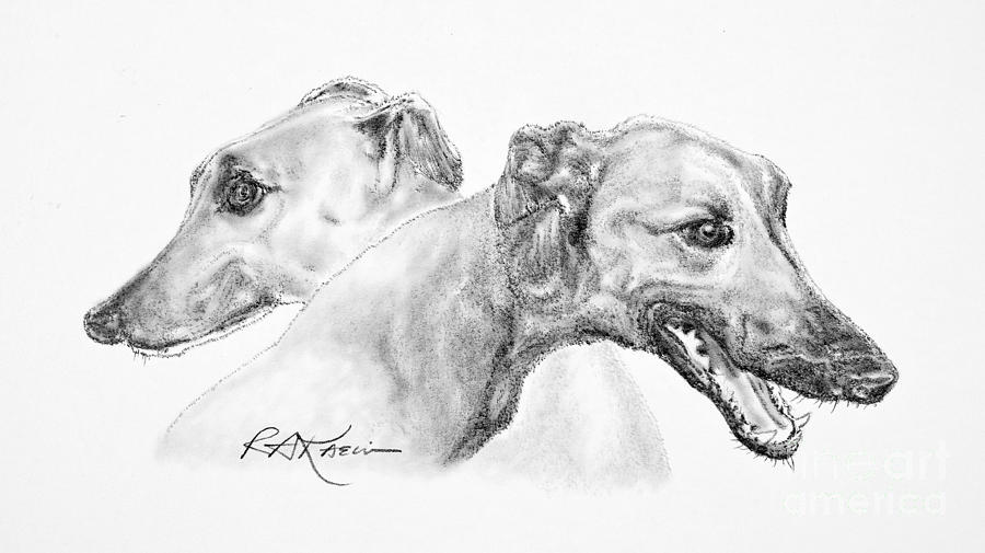 Greyhounds For Two Drawing