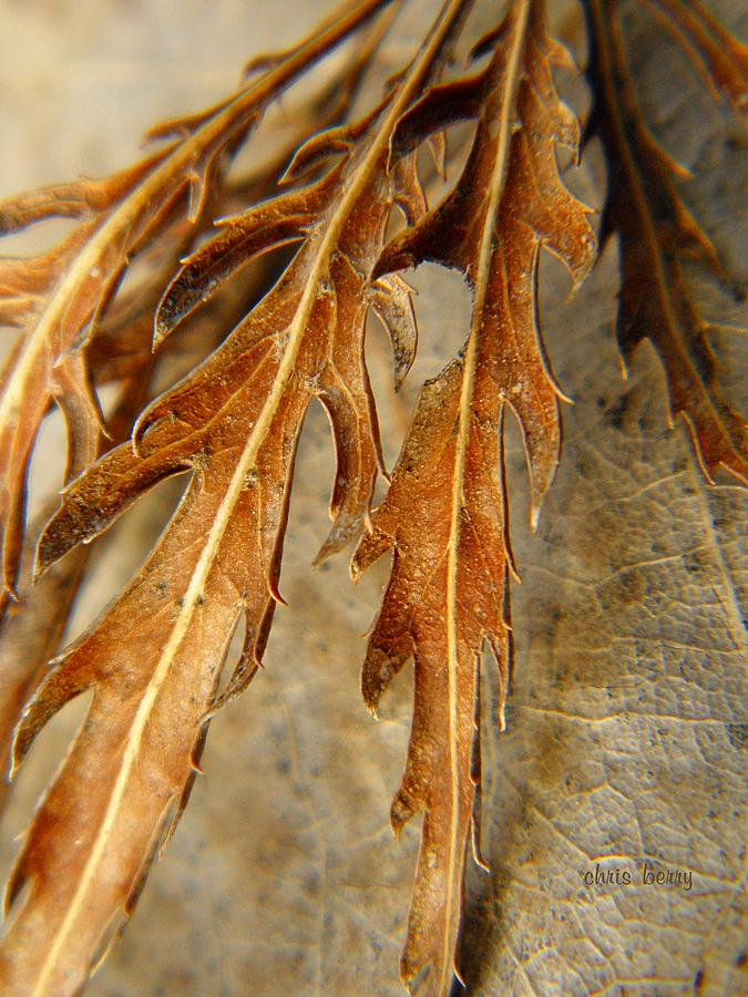 Foliage Photograph - Grip Of Winter by Chris Berry