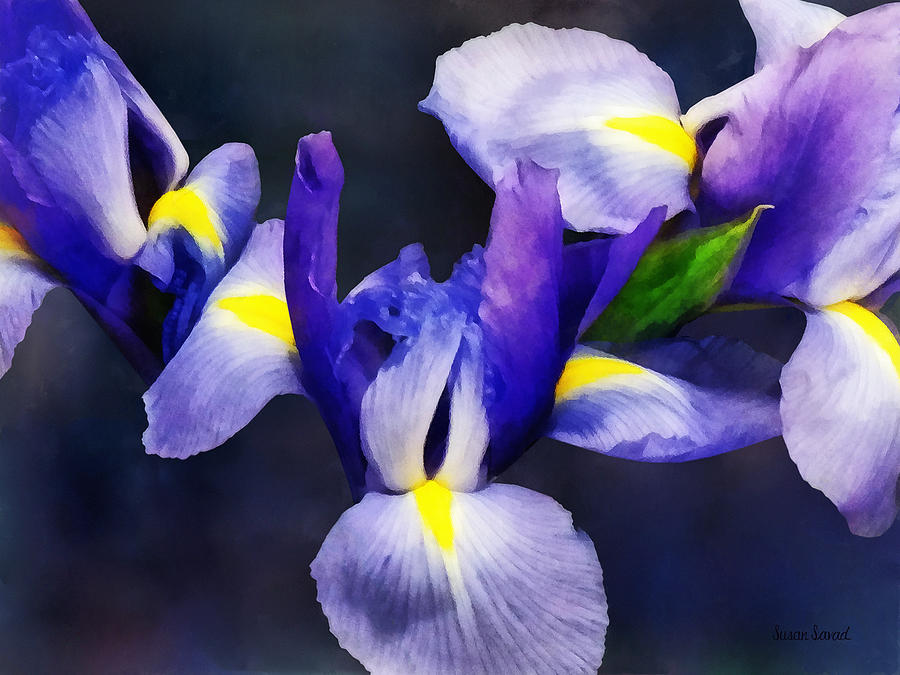 Group Of Japanese Irises Photograph