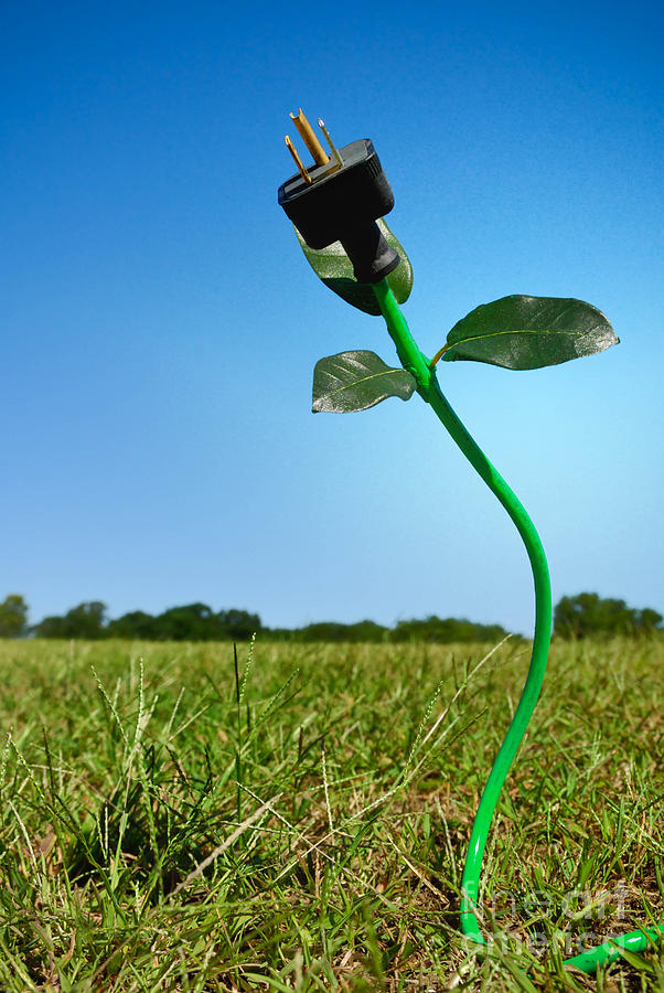 Growing Green Energy Photograph