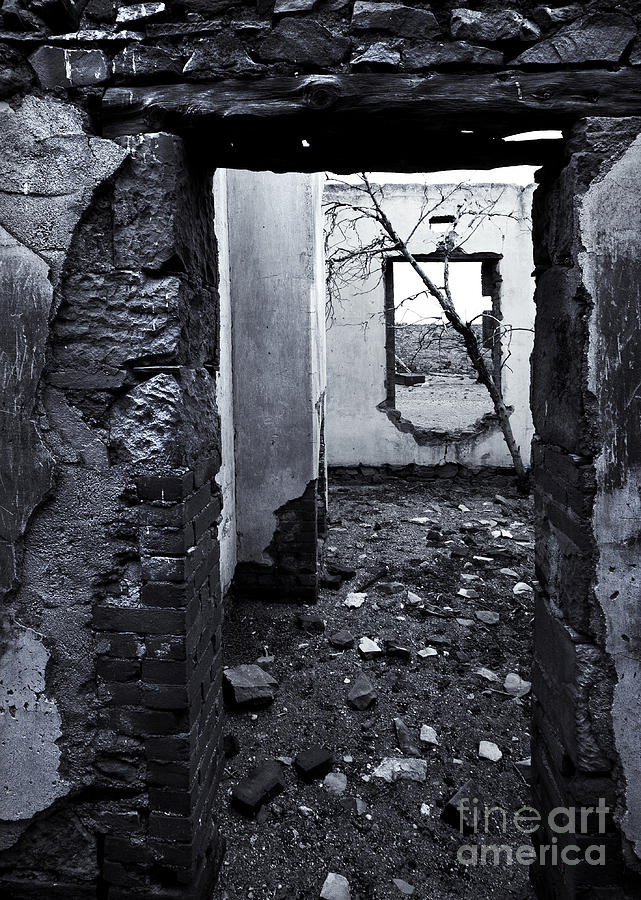 Ruin Photograph - Growing Out Of Ruin by Mike  Dawson