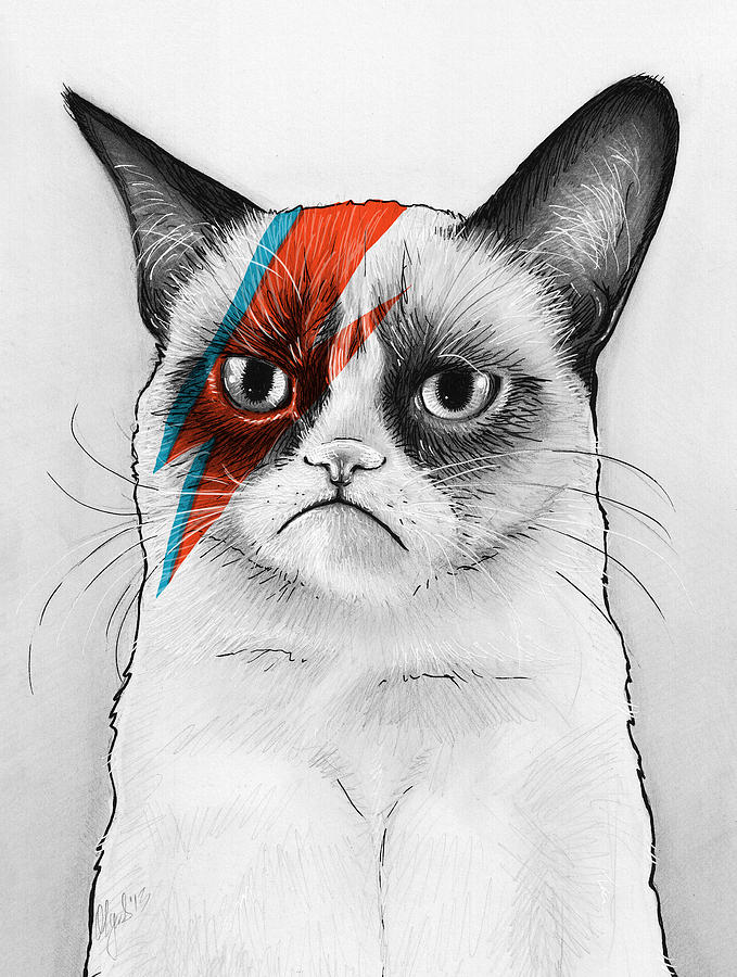 Grumpy Cat Drawing - Grumpy Cat As David Bowie by Olga Shvartsur