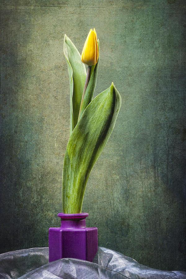 Arrangement Photograph - Grunge Yellow Tulip by Erik Brede