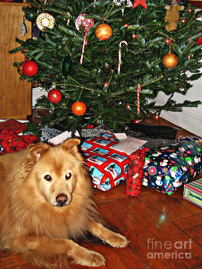 Guardian Of The Christmas Tree Photograph