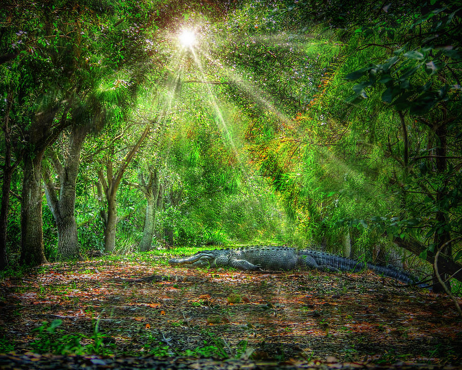 Guardian Of The Forest Photograph  - Guardian Of The Forest Fine Art Print