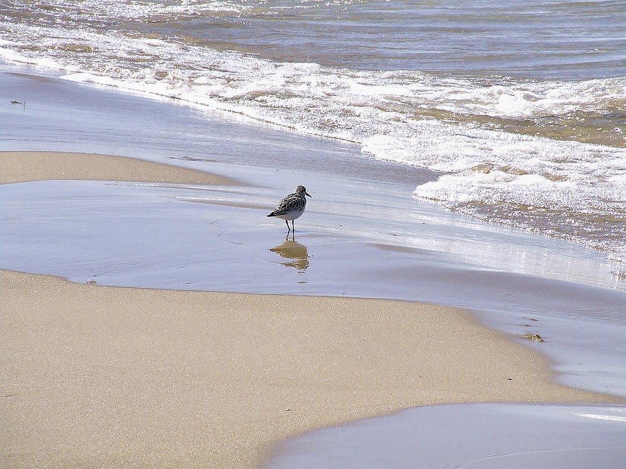 Gull Photograph - Gull On The Shore by Richard Gregurich