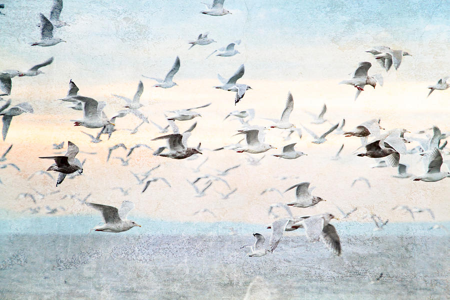 Gulls Flying Over The Ocean Photograph