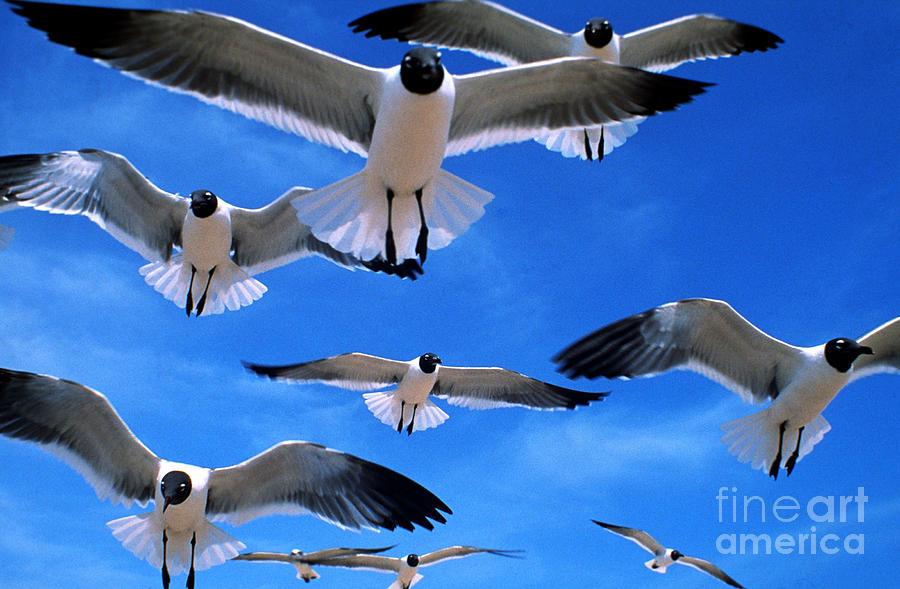 Gull Photograph - Gulls In Flight by Geoge Ranalli