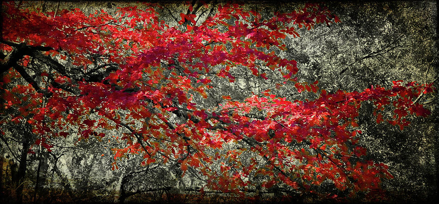 Gum Fall Photograph  - Gum Fall Fine Art Print