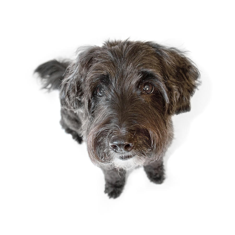 Hairy Dog Photographic Caricature Photograph