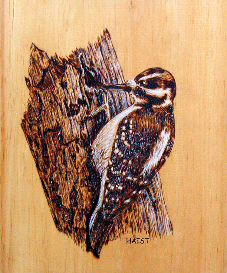 Hairy Woodpecker Pyrography
