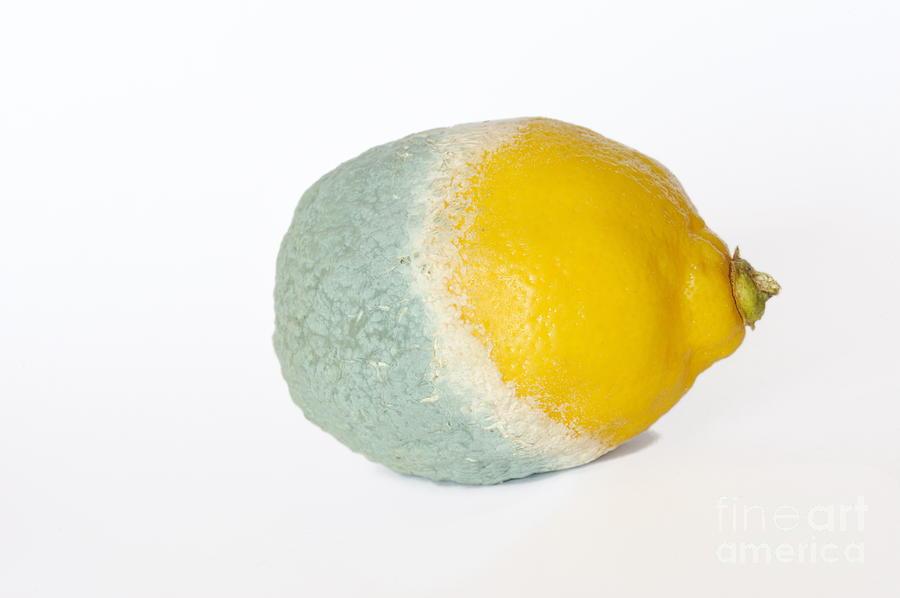 Food And Drink Photograph - Half Rotten Lemon by Sami Sarkis