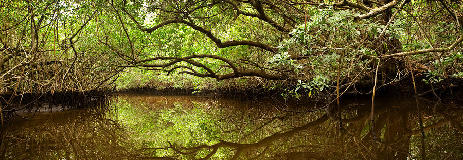 Halfway Creek At Low Tide - Everlglades Photograph  - Halfway Creek At Low Tide - Everlglades Fine Art Print