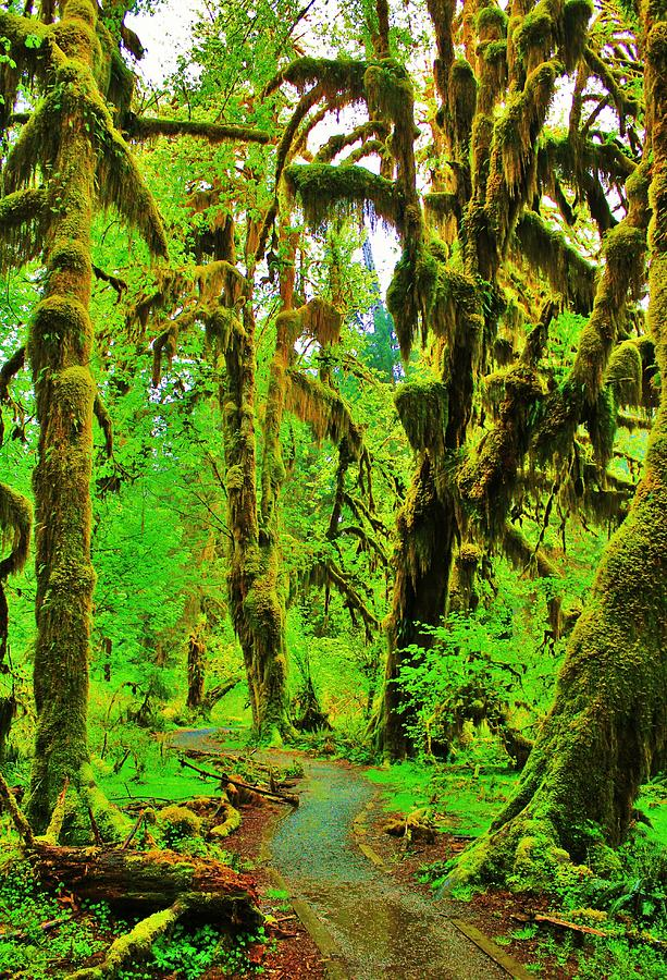 Hall Of Moss Photograph  - Hall Of Moss Fine Art Print