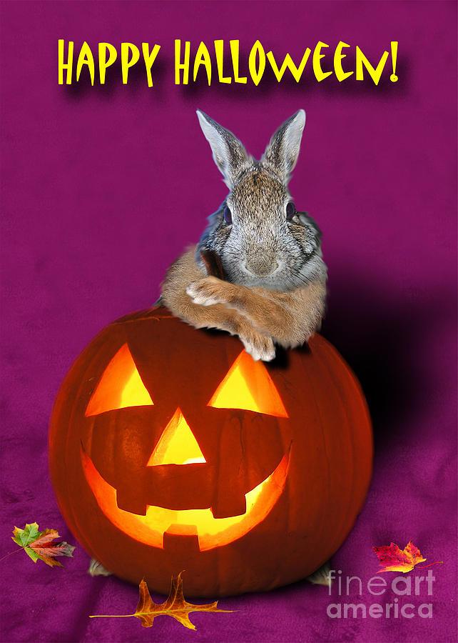 Bunny Photograph - Halloween Bunny Rabbit by Jeanette K