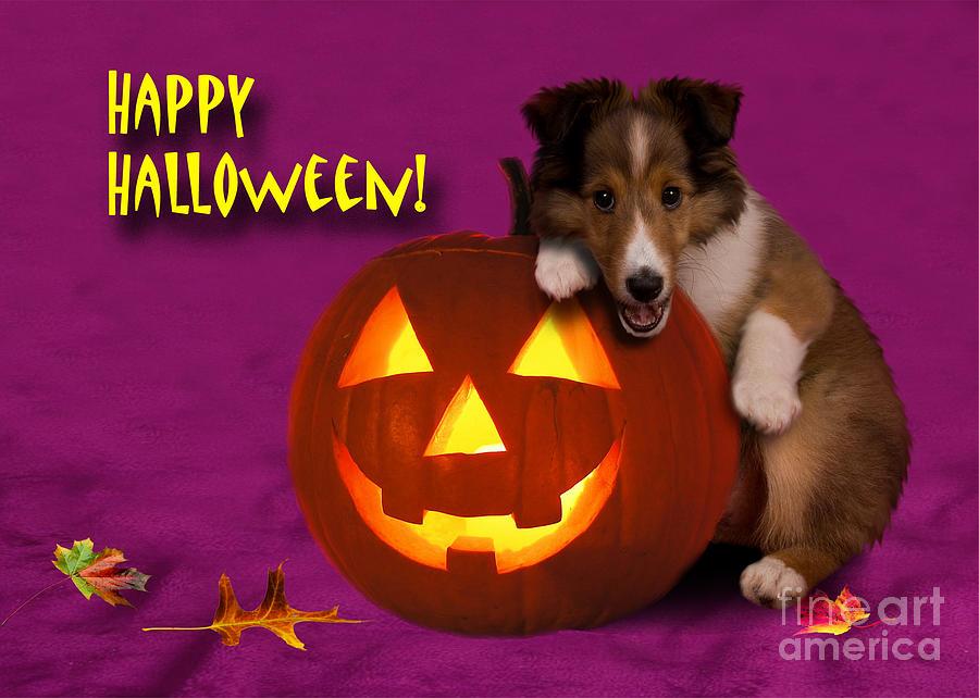 Halloween Shetland Sheepdog Photograph