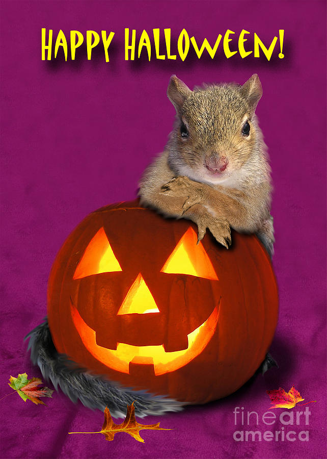 Squirrel Photograph - Halloween Squirrel by Jeanette K