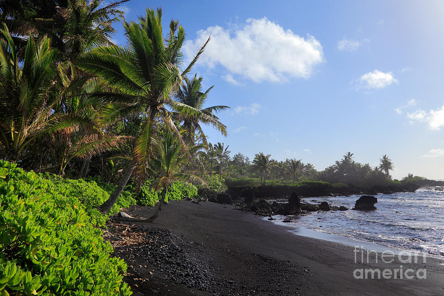 Hana Bay Palms Photograph  - Hana Bay Palms Fine Art Print